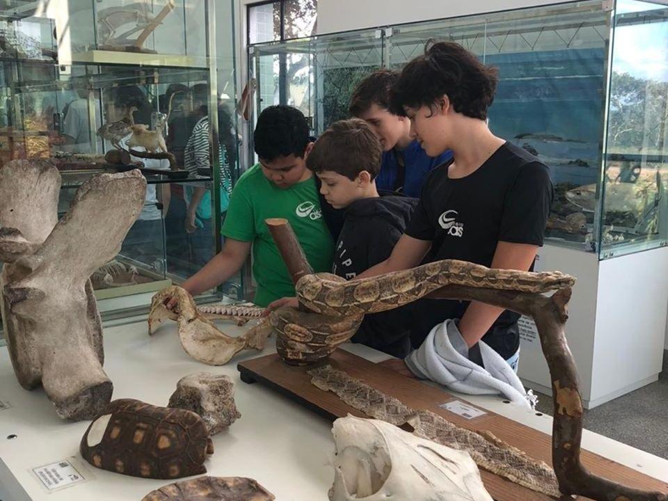 Museu de Zoologia da UEFS